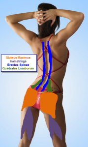 The Posterior Chain